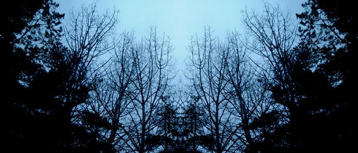 Il bosco dei centenari - Giuseppe Caffulli